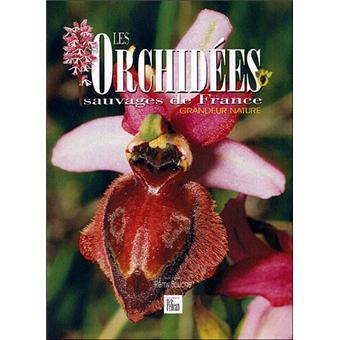 les orchid es sauvages de france broch r my souche achat livre achat prix fnac. Black Bedroom Furniture Sets. Home Design Ideas