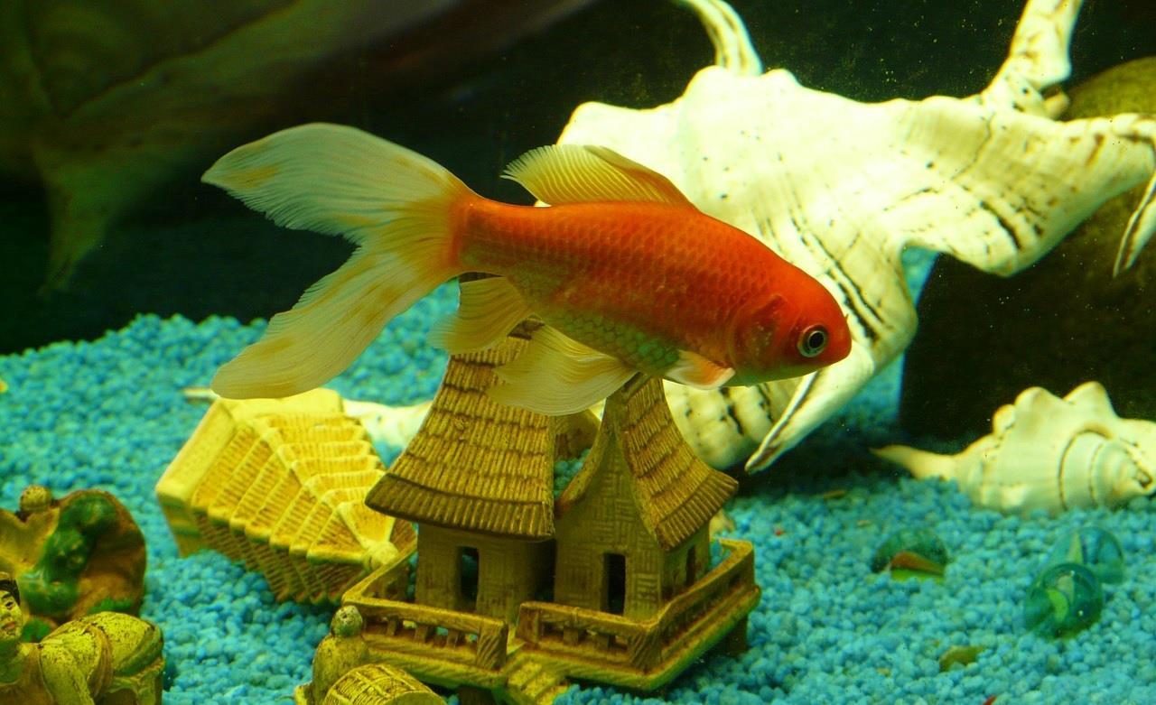 Poissons pour nano aquarium eau douce 28 images for Vente aquariophilie