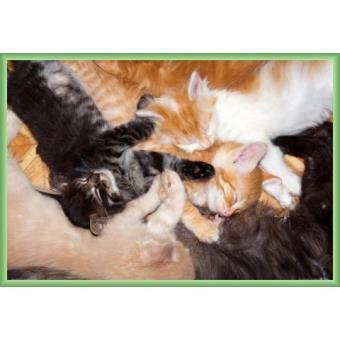 poster encadr chats c lins de groupe 61x91 cm cadre plastique vert top prix sur. Black Bedroom Furniture Sets. Home Design Ideas