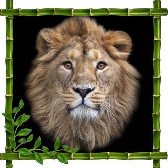 Sticker autocollant cadre bambou t te de lion dimensions for Prix poisson rouge tete de lion