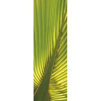 palmiers papier peint photo poster autocollant feuille de palmier de chanvre 250x79 cm top. Black Bedroom Furniture Sets. Home Design Ideas
