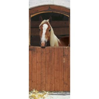 Chevaux papier peint photo poster cheval dans son box 2 for Poster de porte cheval