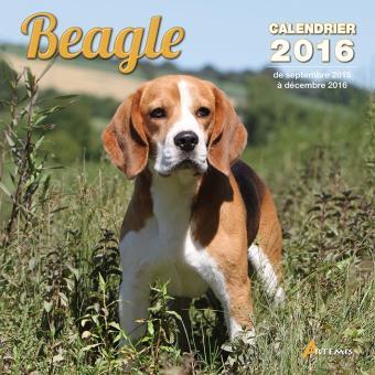 calendrier 2016 beagle broch collectif achat livre prix. Black Bedroom Furniture Sets. Home Design Ideas