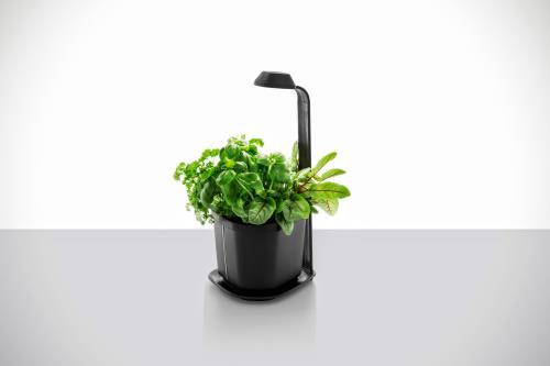 Mini potager de cuisine Tregren Genie Noir 3 plantes