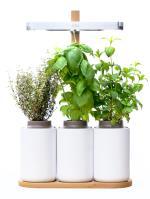 mini potager d 39 int rieur lilo pr t pousser jardini res et bacs achat prix fnac. Black Bedroom Furniture Sets. Home Design Ideas