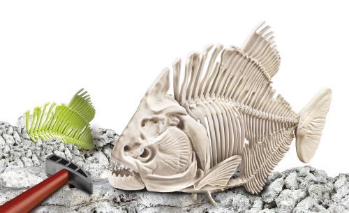 Ce coffret permet aux enfants de voyager dans le passé. Grâce à un burin et à un marteau, les enfants pourront creuser dans un bloc de terrain, y découvrir des restes fossilisés du Piranha pour ensuite assembler son squelette.