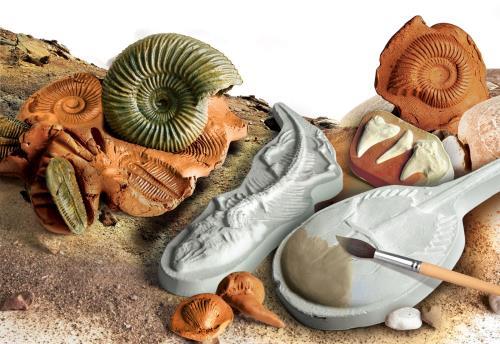 Découvre les mystères de l´évolution terrestre. Reproduis les fossiles et personnalise-les en les décorant.