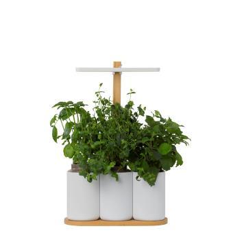 mini potager d 39 int rieur connect lilo pr t pousser jardini res et bacs achat prix fnac. Black Bedroom Furniture Sets. Home Design Ideas