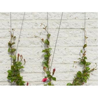 plante grimpante sur cable