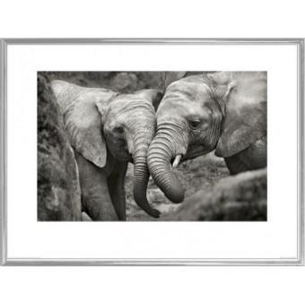 poster reproduction encadr elphants lphants amoureux marina cano 60x80 cm cadre plastique argent top prix fnac - Cadre Elephant