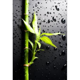 Stickers Muraux Déco : Bambou Dimensions   170x250cm, Autocollants Muraux,  Top Prix | Fnac