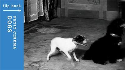 Dogs, Petit Cinema