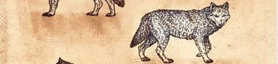 Los lobos huargo