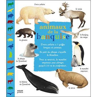 image animaux banquise