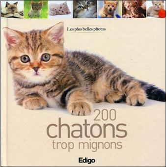 200 chatons trop mignons broch collectif achat - Chatons trop mignons photos ...