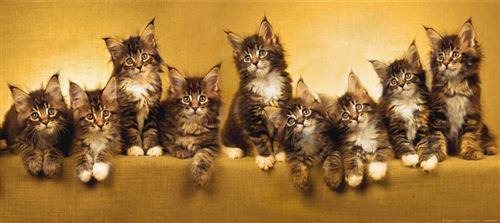 Kittens, photo murale intissée, 202 x 90 cm, 1 part