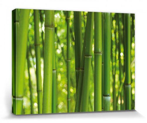 Bambous Poster Reproduction Sur Toile, Tendue Sur Châssis - Forêt De Bambou (30x40 cm)
