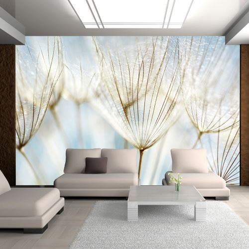Papier peint | Fond abstrait | 200x154 | Fleurs | Pissenlits | graines de pissenlit |