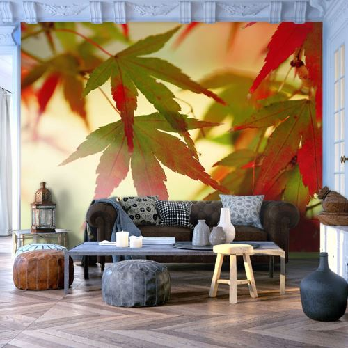 Papier peint - Feuilles colorées - Décoration, image, art   Paysages   Arbres et Forêt  