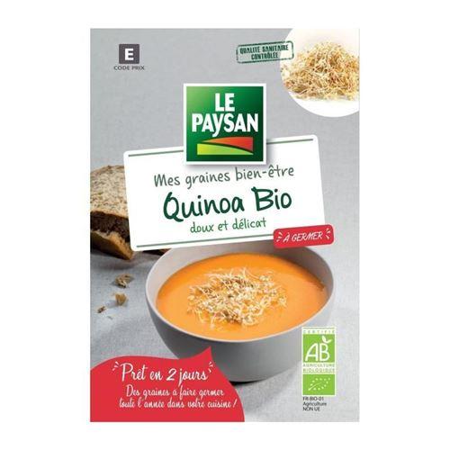 le paysan quinoa a germer