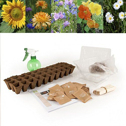 Graines de fleurs en coffret pour jardin à l'école