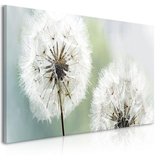 Tableau - Fluffy Dandelions (1 Part) Green Wide .Taille : 100x45