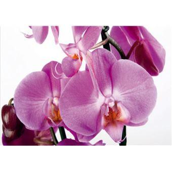 Fleurs Papier Peint Photo Poster Orchidee Rose Violette 4 Parties