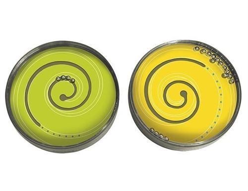 Moses jeu d'adresse Up and Down spirale de 9 cm