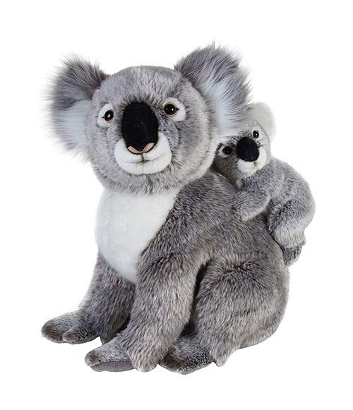 National Géographic - 770761 - Famille Koala