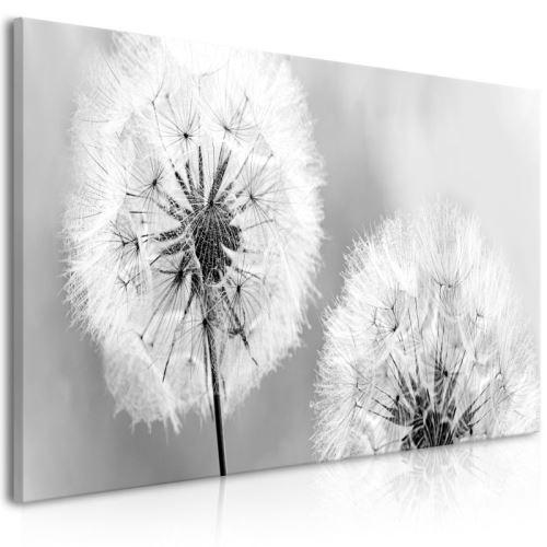 Tableau - Fluffy Dandelions (1 Part) Grey Wide .Taille : 100x45