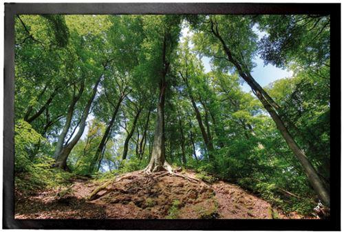 Forêts Paillasson Essuie-Pieds - Forêt Magique (40x60 cm)
