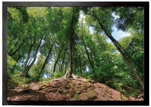 Forêts Paillasson Essuie-Pieds - Forêt Magique (50x70 cm)