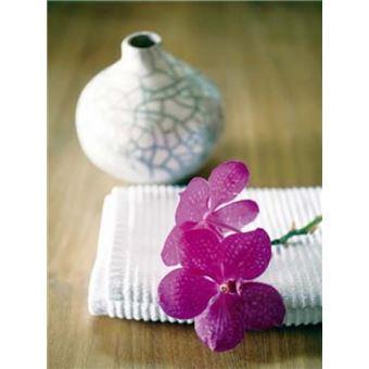 Fleurs Poster Reproduction Orchidee Rose Vuillon 40x30 Cm