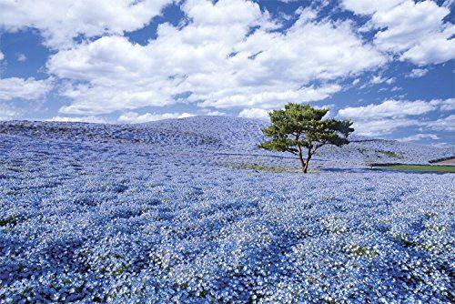 Puzzle 1000 pièces Monde d'une vue superbe Ibaraki Japon Nemophila blooming hill (50x75cm)