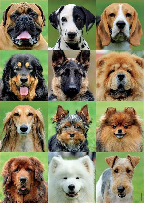 Puzzle collage de chiens - 500 pieces - educa - collection animaux