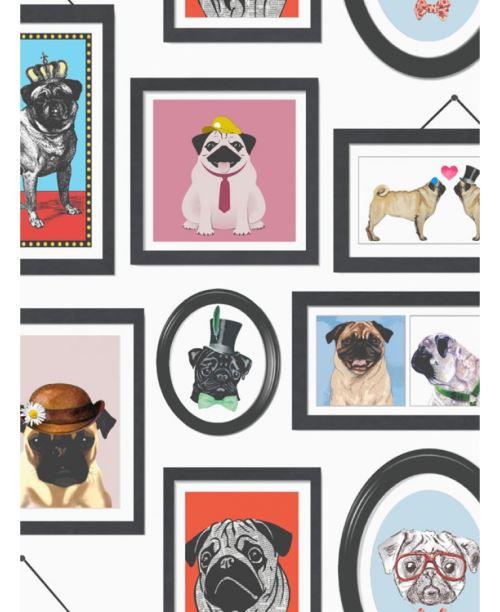 La vie d'un Pug Carlin images papier peint Holden