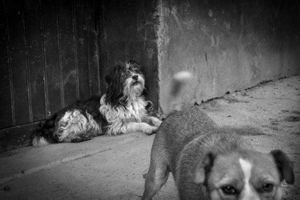 Perros y gatos Mikel Aristregi