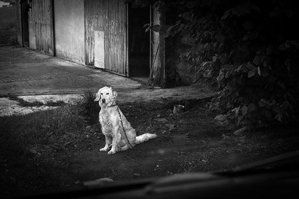 Sobre perros y gatos (II)