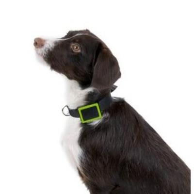 Localizador GPS Weenect para Mascotas