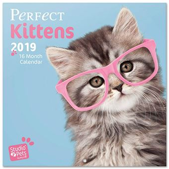 Calendario 2019 Perfect Kittens