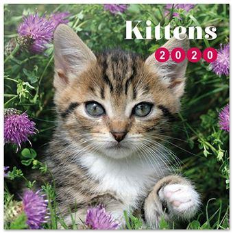 Calendario de pared 2020 Erik 30x30 multilingüe Cat-Kittens Simon K. & Greg C.