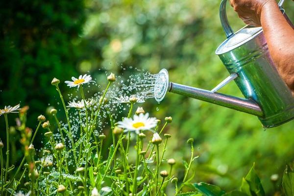 Arroser Ses Plantes C Est Tout Un Art Conseils D Experts Fnac