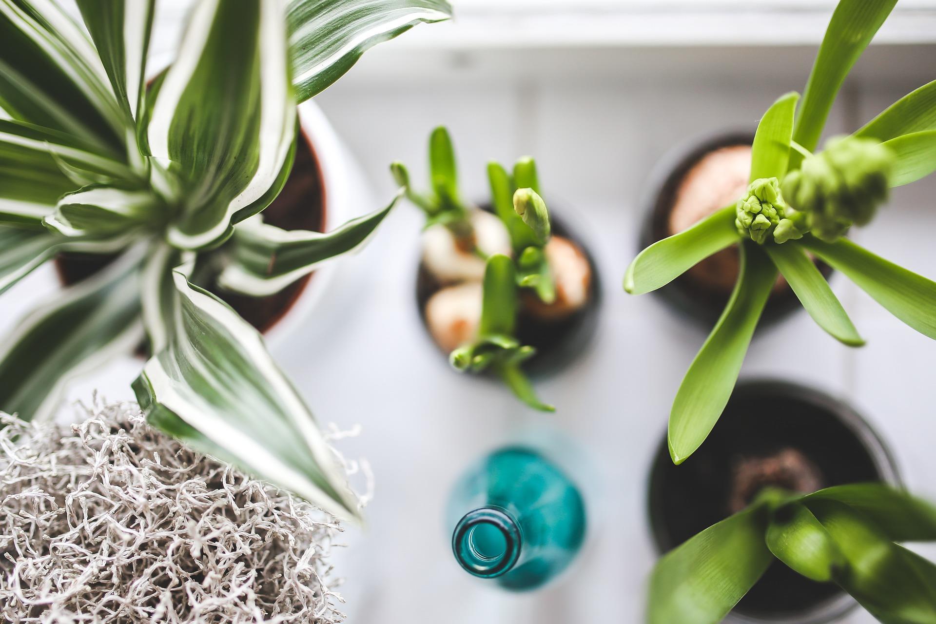 Arrosage Automatique D Intérieur arroser ses plantes, c'est tout un art ! - conseils d