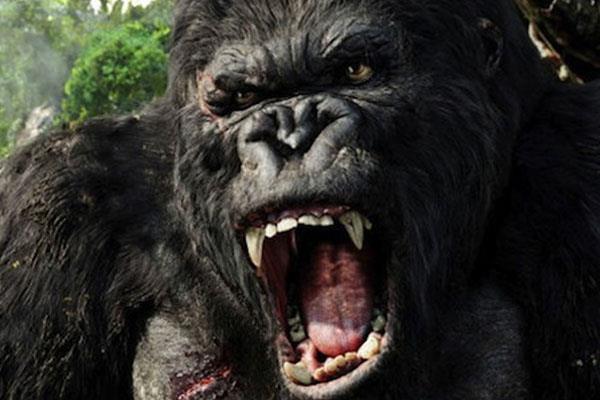 King Kong : gare au gorille !