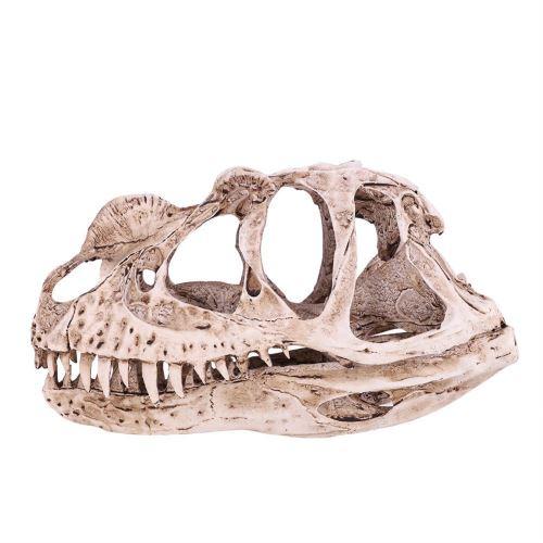 Modèle De Crâne De Dinosaure Simulé En Résine Décor Bureau Prop D'Enseignement