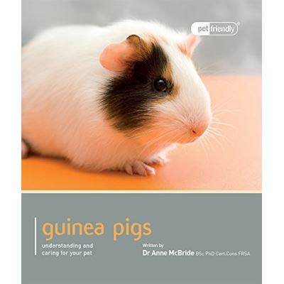 Guinea Pig - Pet Friendly: Understanding and Caring for Your Pet