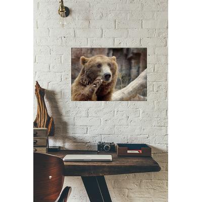 Cadre déco en plexiglas 29.7cm x 42cm épais. 3mm gros ours brun