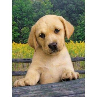Puzzle 1000 pièces - Chiot Labrador beige - Achat & prix | fnac
