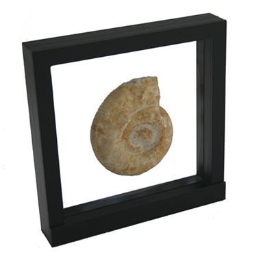 Présentoir 3D pour minéraux et autres objet de collection