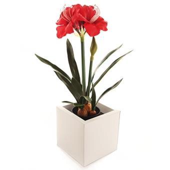 Closer To Nature Ft033rd Amaryllis Fleur Artificielle Rouge 55 Cm